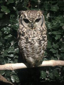 Owl Forest 2