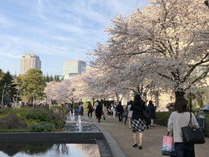 Sakura at Tokyo Midtown Part2