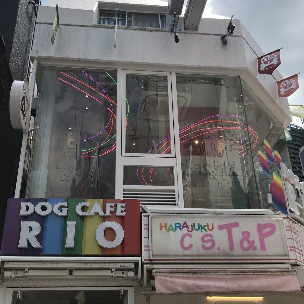Dog Cafe RIO in Takeshita-dori, Harajuku Tokyo